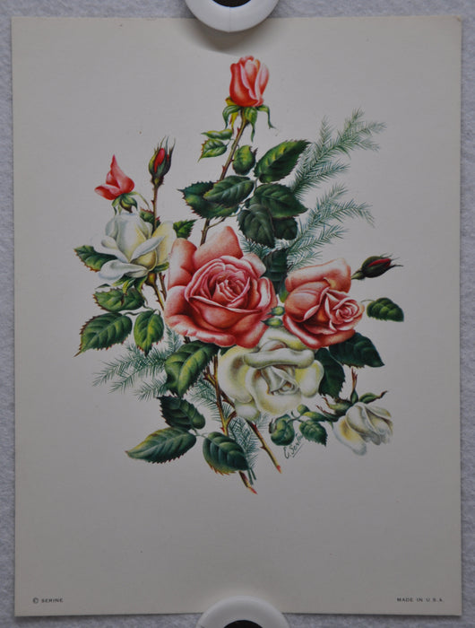 E Serton Pink & White Roses Lithograph Art Print 6 x 8 Serine Made in USA   - TvMovieCards.com