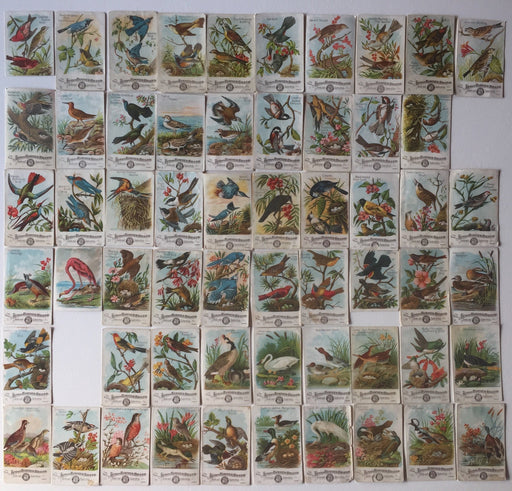 Birds - Beautiful Birds of America 58 Cards of a 60 Card Set Arm & Hammer 1886 J1   - TvMovieCards.com
