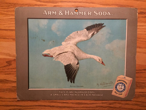 Birds - Arm & Hammer Advertising Store Display Card Sign - Snow Goose  J4   - TvMovieCards.com