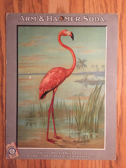 Birds - Arm & Hammer Advertising Store Display Card Sign - Flamingo J4   - TvMovieCards.com