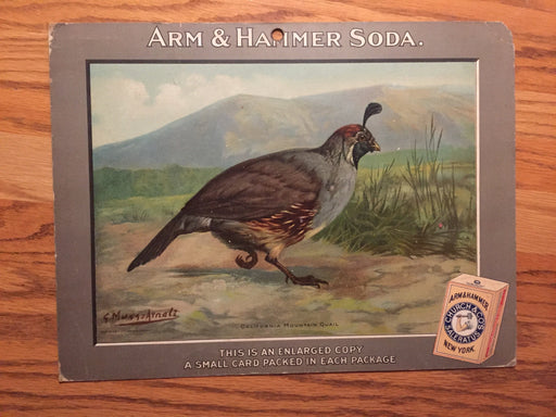 Birds - Arm & Hammer Advertising Store Display Card Sign - California Mountain Q   - TvMovieCards.com