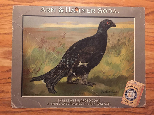 Birds - Arm & Hammer Advertising Store Display Card Sign - Black Cock J4   - TvMovieCards.com