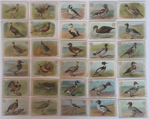 Birds - Game Birds 30 Vintage Card Set Arm & Hammer 1904 J3  Church Co. Small   - TvMovieCards.com