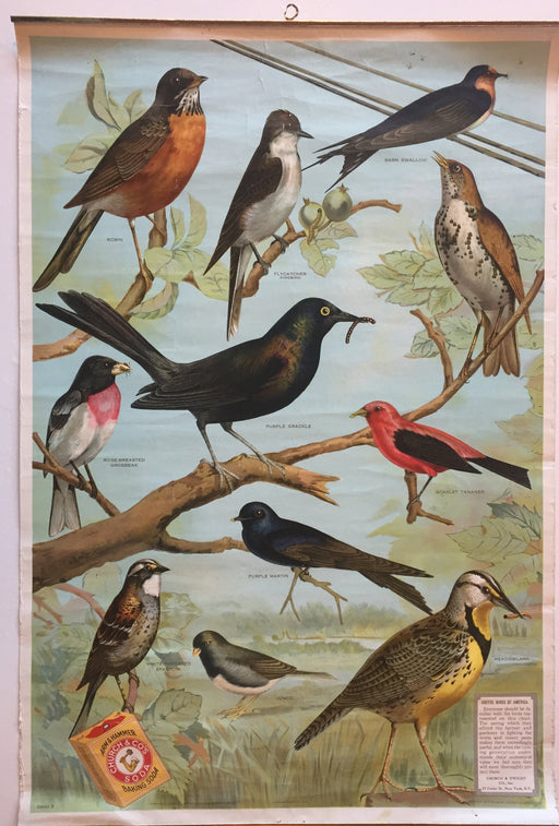 Useful Birds of America Advertising Store Display Poster Arm & Hammer J5 17X25   - TvMovieCards.com