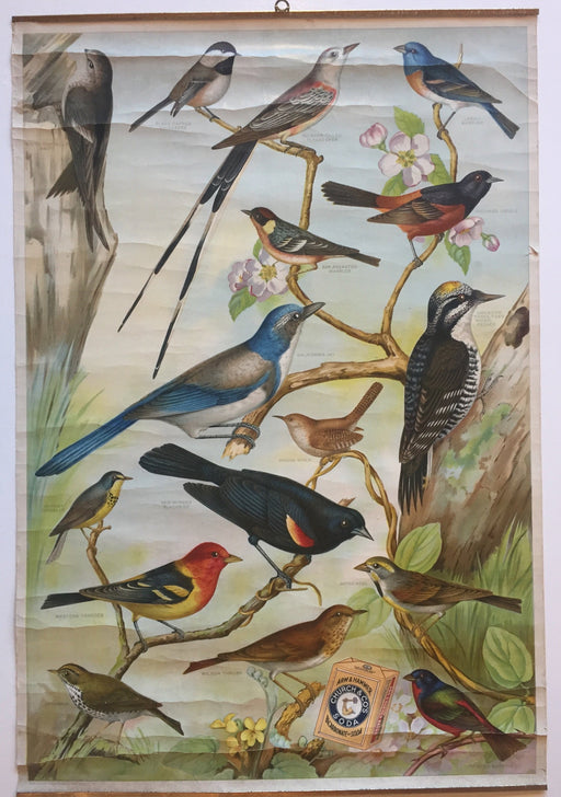 Useful Birds of America Advertising Store Display Poster Arm & Hammer J7 Bunting   - TvMovieCards.com