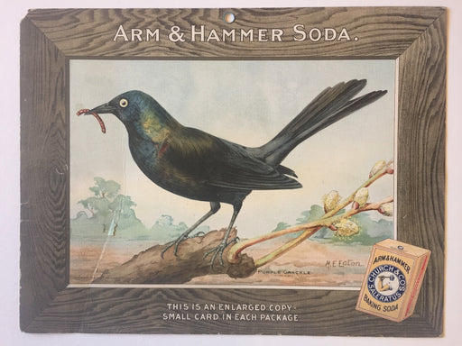 Birds - Arm & Hammer Advertising Store Display Card Sign - Purple Grackle J9   - TvMovieCards.com