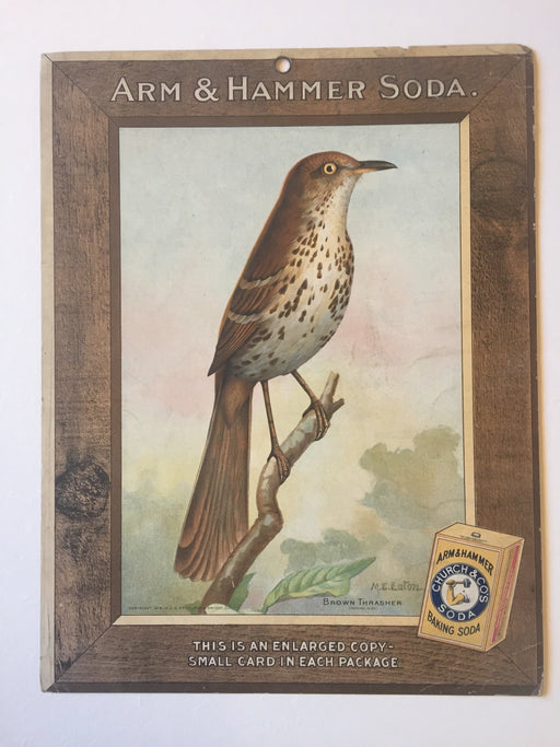 Birds - Arm & Hammer Advertising Store Display Card Sign - Brown Thrasher J9   - TvMovieCards.com