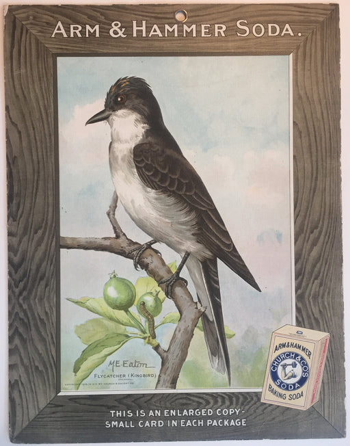 Birds - Arm & Hammer Advertising Store Display Card Sign - Flycatcher (Kingbird) J5   - TvMovieCards.com