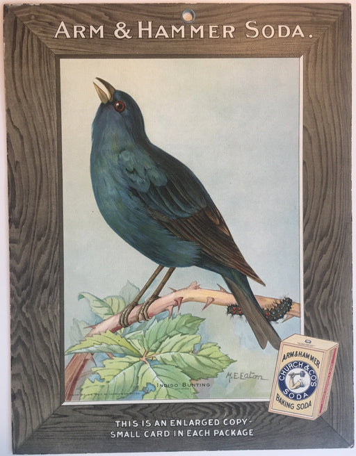 Birds - Arm & Hammer Advertising Store Display Card Sign - Indigo Bunting J5   - TvMovieCards.com