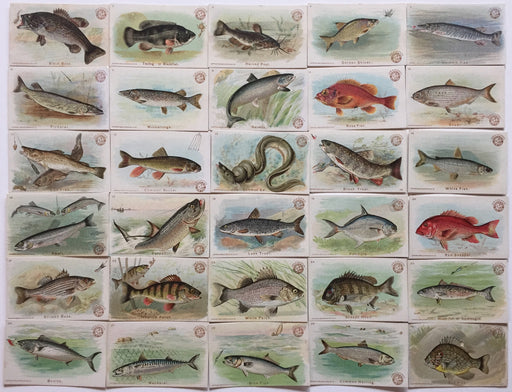 Fish Series Complete 30 Card Set Arm & Hammer 1900 J15  Church & Co.   - TvMovieCards.com