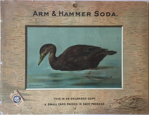 Birds - Arm & Hammer Advertising Card Sign Black Duck J3 Game Birds   - TvMovieCards.com