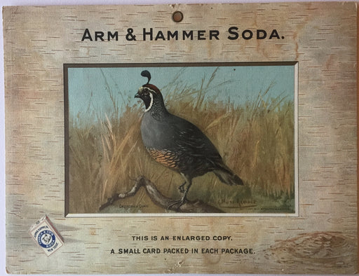 Birds - Arm & Hammer Advertising Card Sign California Quail J3 Game Birds   - TvMovieCards.com