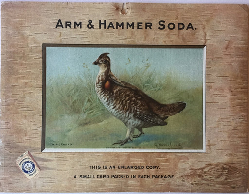 Birds - Arm & Hammer Advertising Card Sign Praire Chicken J3 Game Birds   - TvMovieCards.com