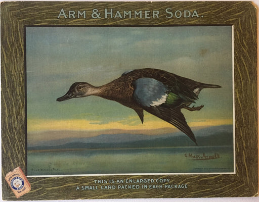 Arm & Hammer Advertising Store Display Card Sign - Blue Winged Teal J4   - TvMovieCards.com