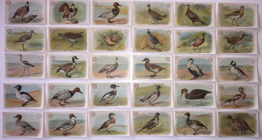 Birds - Game Birds 30 Vintage Card Set Arm & Hammer 1904 J3 Church & Co. Large   - TvMovieCards.com