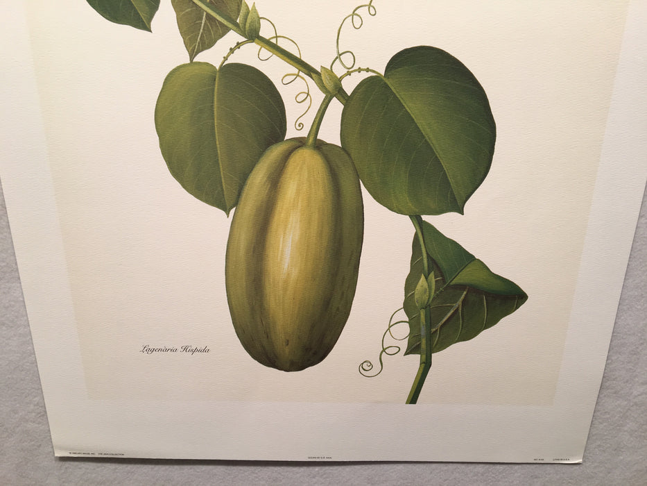 "E.R. Saal ""Gourd"" Limited Edition Lithograph Print Java Collection   - TvMovieCards.com"