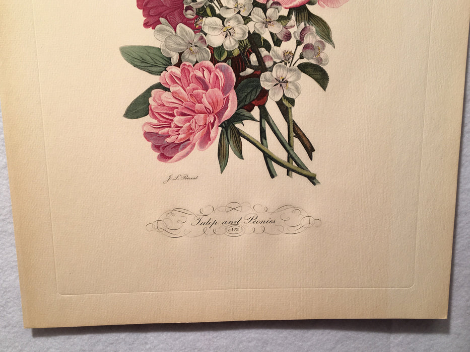 "Jean Louis Prevost Hand Colored Print ""Tulips and Peonies No. 5""   - TvMovieCards.com"