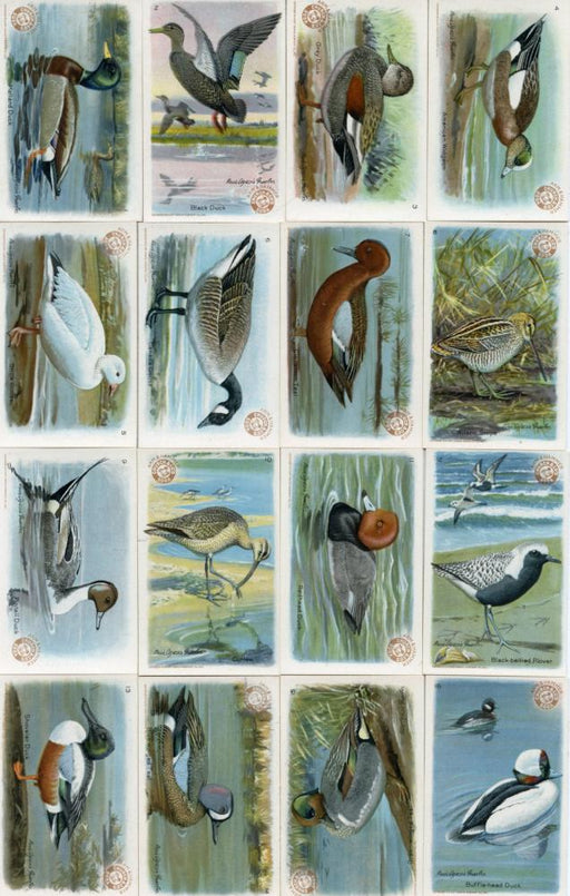 Birds Useful Birds of America 4th Series 30 Vintage Card Set Church & Dwight J-8   - TvMovieCards.com