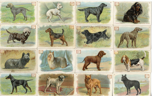 New Series of Dogs 30 Card Soda Set 1910 J14 JOHN DWIGHT Church Arm & Hammer   - TvMovieCards.com