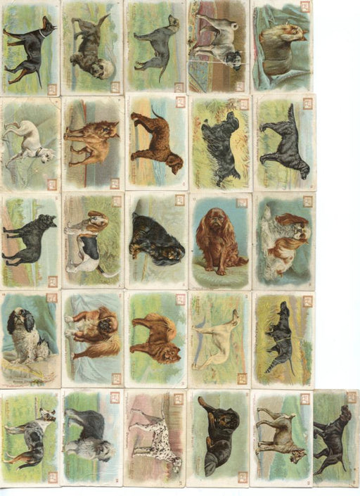 New Series of Dogs 26 Soda Card  Lot 1910 J14 JOHN DWIGHT Church Arm & Hammer Sm   - TvMovieCards.com