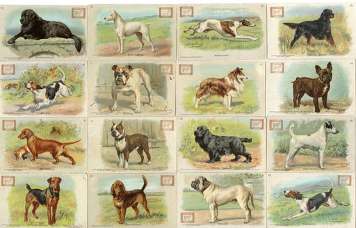 Champion Dogs 30 Card Soda Set 1902 J13 JOHN DWIGHT Church Arm & Hammer   - TvMovieCards.com