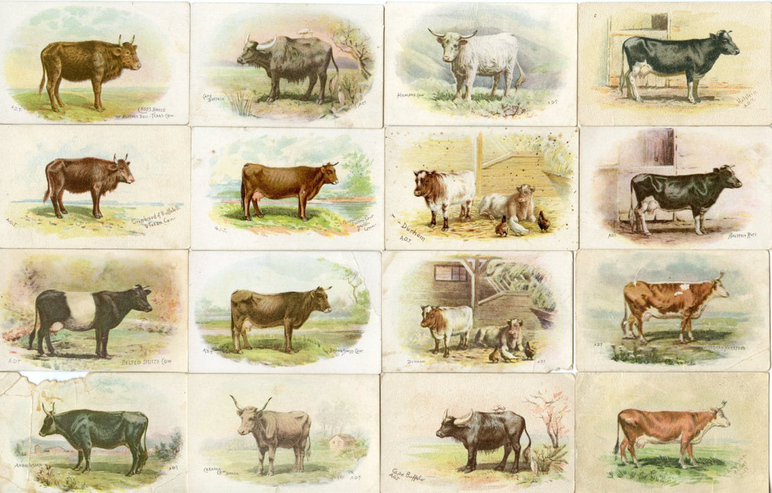 Dairy Animals 47 Different Variant Soda Card 1893 J12 Cow John Dwight Church Arm   - TvMovieCards.com