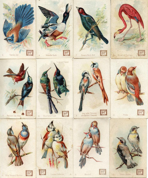 Birds - Beautiful Birds New Series 34/60 Vintage Card Lot John Dwight Soda 1888   - TvMovieCards.com