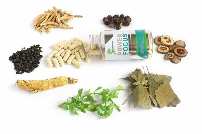 The Complete Beginner's Guide to Herbal Nootropics