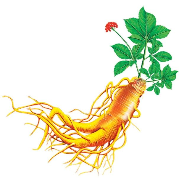 Guide to Korean Ginseng - Benefits, Best Type, Dosage and Side Effects