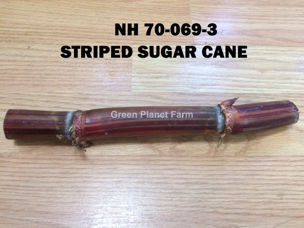 Sugar Cane Cuttings Heirloom Varieties