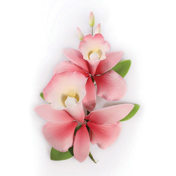 Pink Orchid - 152mm