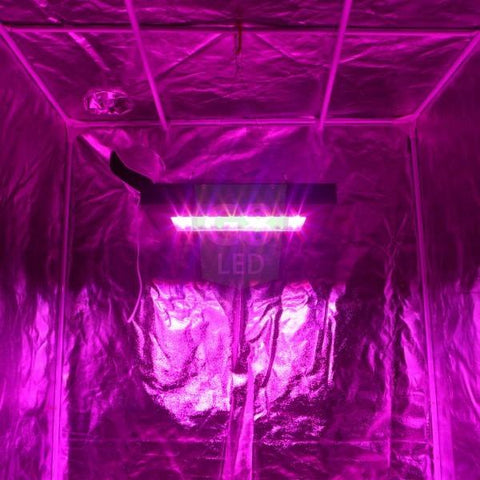 LED - Dorm Grow 240 Watt Full Spectrum G8LED BLOOM Only