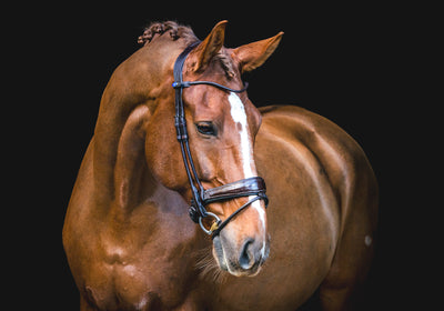 All in bridle by Ps of Sweden