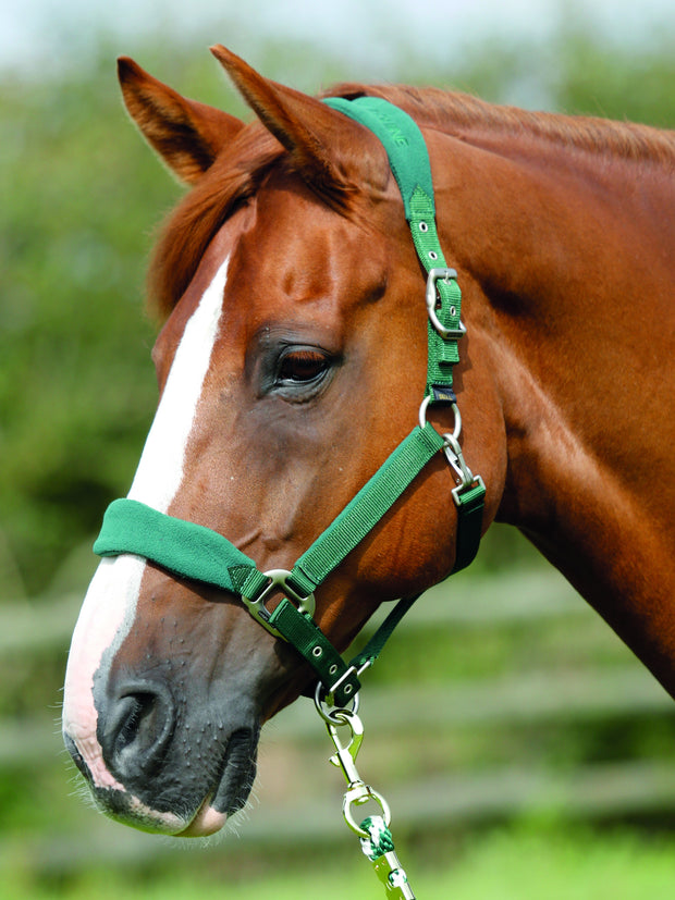 Premier Equine Fleece padded halter - Green