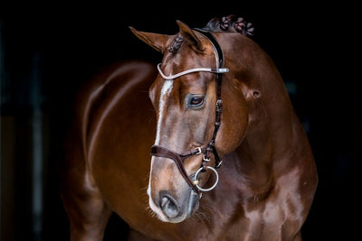 Nirak Revolution bridle, Snaffle Bridle, Ps of Sweden - Laura's Tack Room