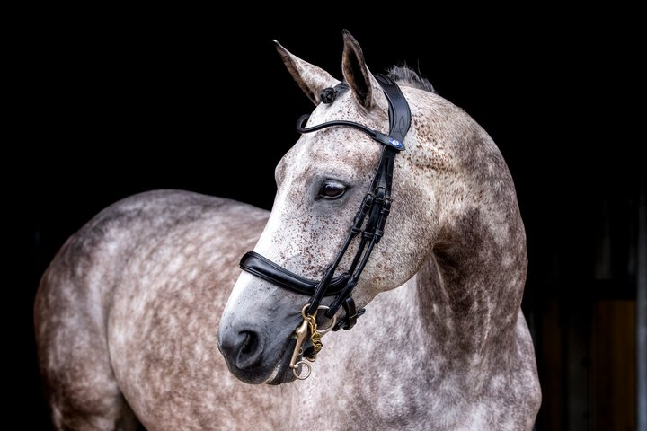 Paragon Double Bridle, Double Bridle, Ps of Sweden - Laura's Tack Room