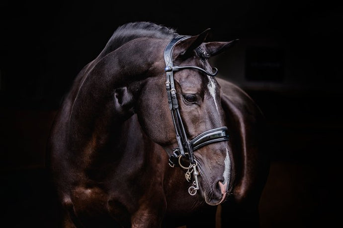 Passage Patent Double Bridle, Double Bridle, Ps of Sweden - Laura's Tack Room