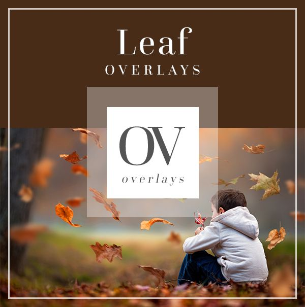 Leaf and Branch Autumn Overlays | Bellevue Avenue