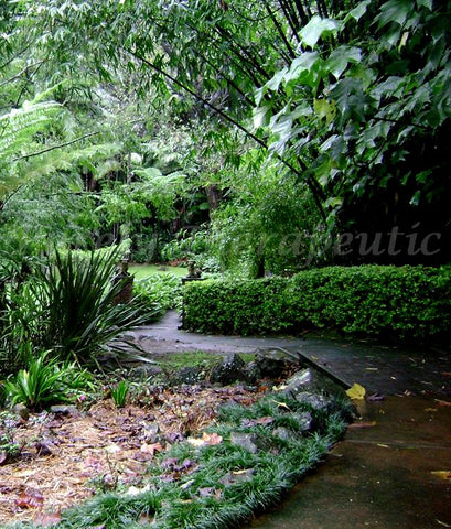 Mount Tanborine Botanical Garden Path