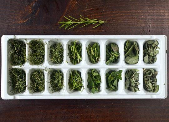 Fresh herbs being stored in ice cube trays, to be preserved in cold and oil