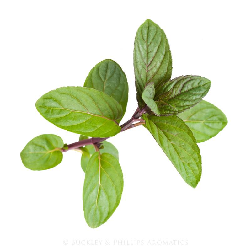 Peppermint Essential Pure Oil