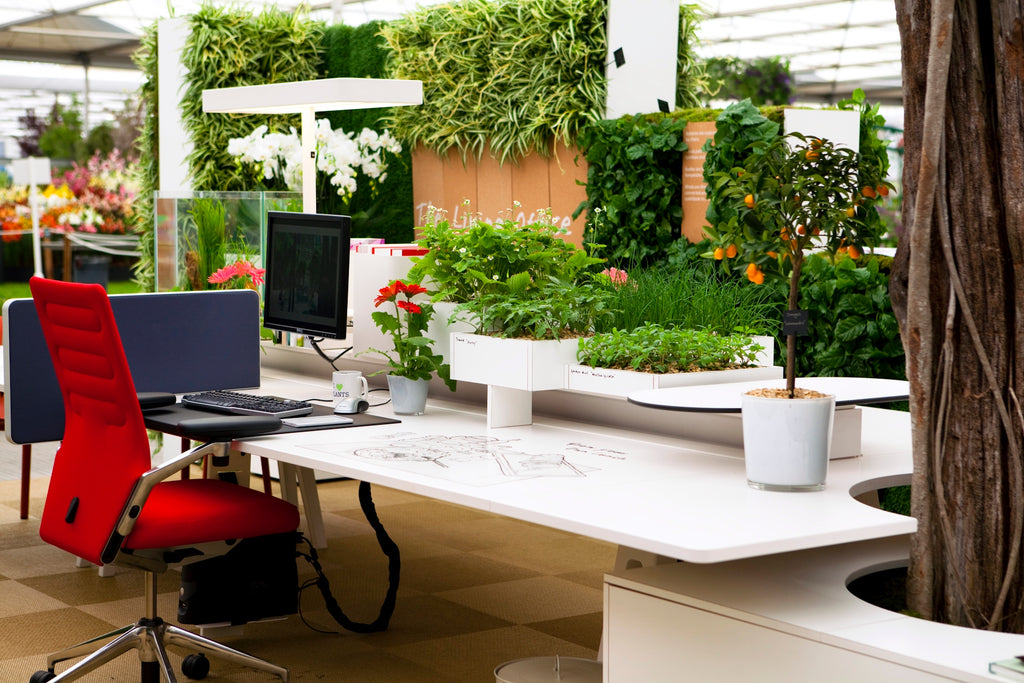 Office's flourishing and performance is growing… with greenery