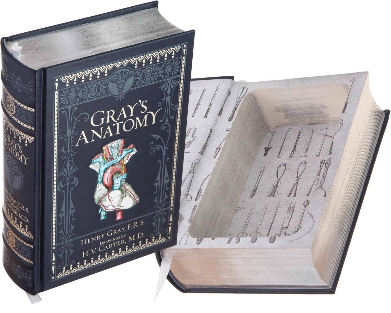 Grays Anatomy By Henry Gray Frs With Drawings By Hv Carter