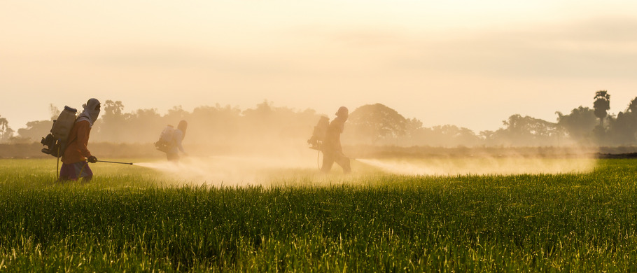 Pesticides In Your Home: A Silent Killer?