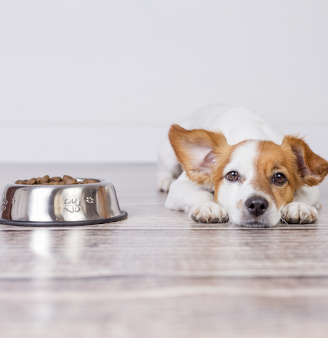 Corruption In The Dog Food Industry Creates Major Health Concerns Puppy and Food Image