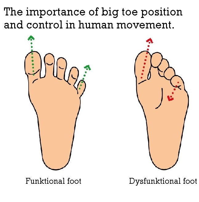 THE IMPORTANCE OF BIG TOE POSITION AND CONTROL IN HUMAN MOVEMENT