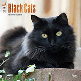 Black Cats 2018 12 x 12 Inch Monthly Square Wall Calendar with Foil Stamped Cover, Animals Cats