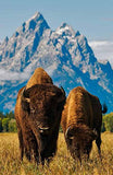 Lonely Planet USA's National Parks (Travel Guide)