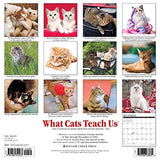 What Cats Teach Us 2017 Wall Calendar