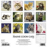 Just Maine Coon Cats 2018 Wall Calendar